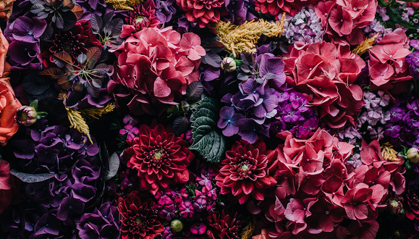 How To Choose Supermarket Flowers